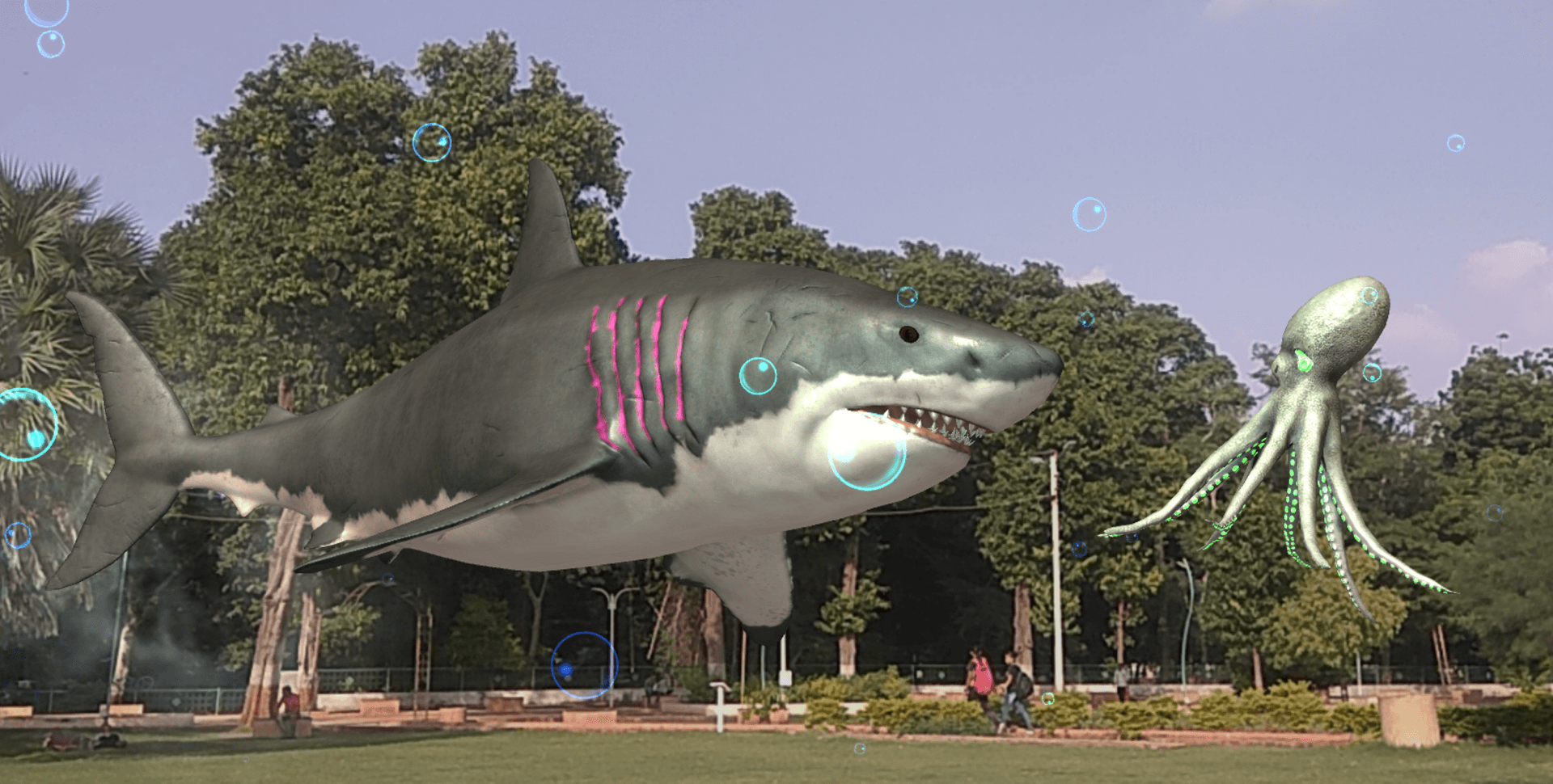 Sharks are hunting